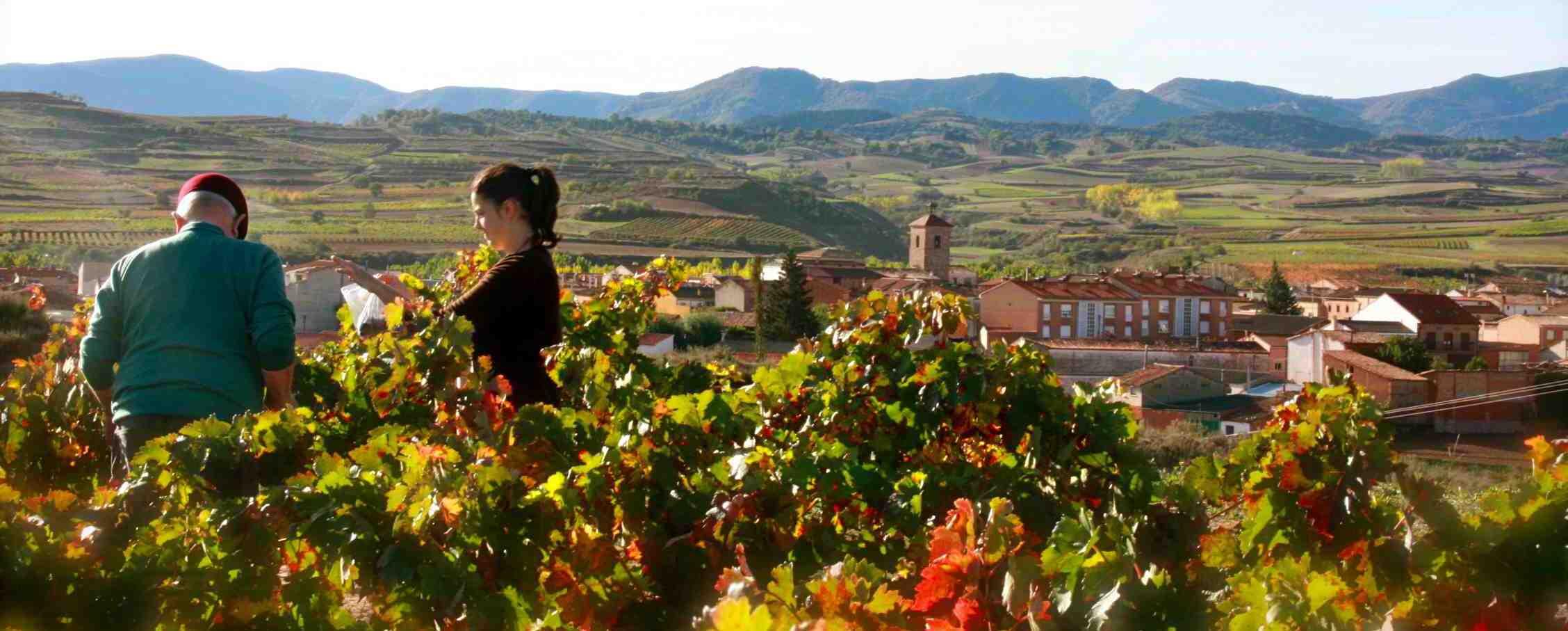 Basque Rioja Wine region - Die Oase der Weingötter